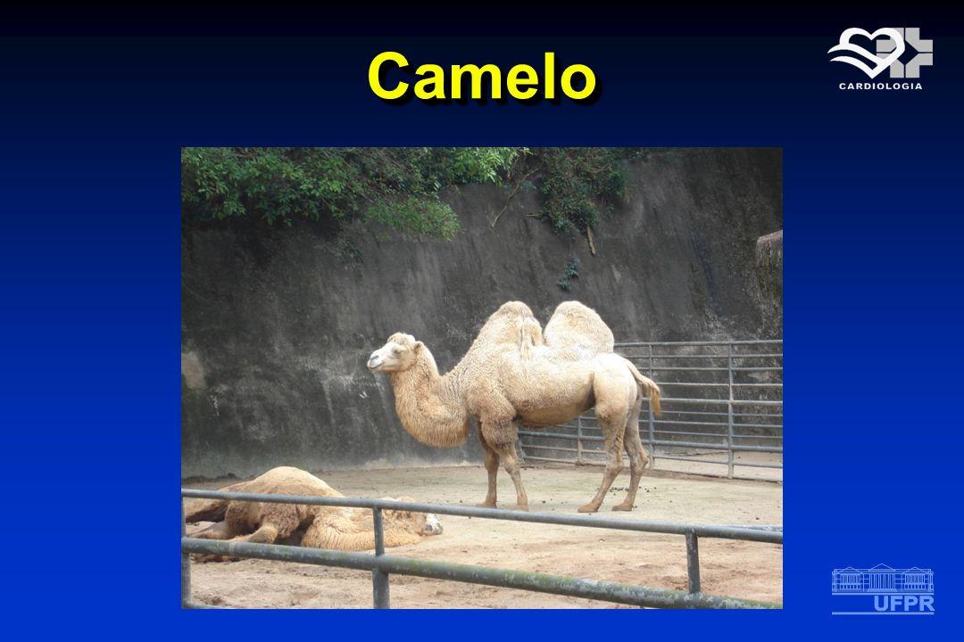 CameloCamelo