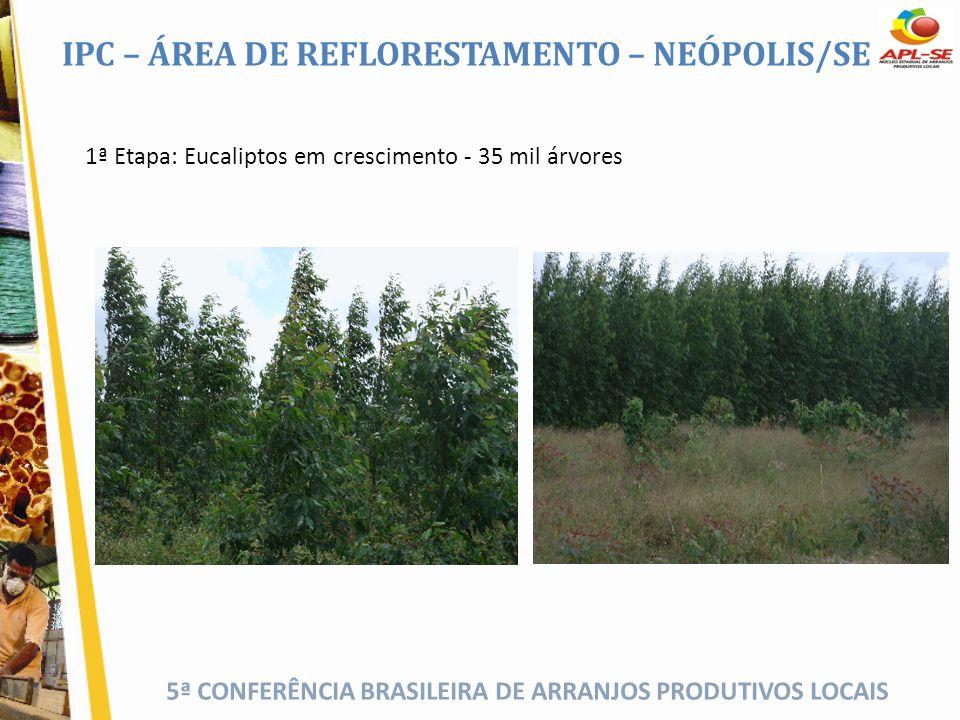 5ª CONFERÊNCIA BRASILEIRA DE ARRANJOS PRODUTIVOS LOCAIS 1ª Etapa: Eucaliptos em crescimento - 35 mil árvores IPC – ÁREA DE REFLORESTAMENTO – NEÓPOLIS/