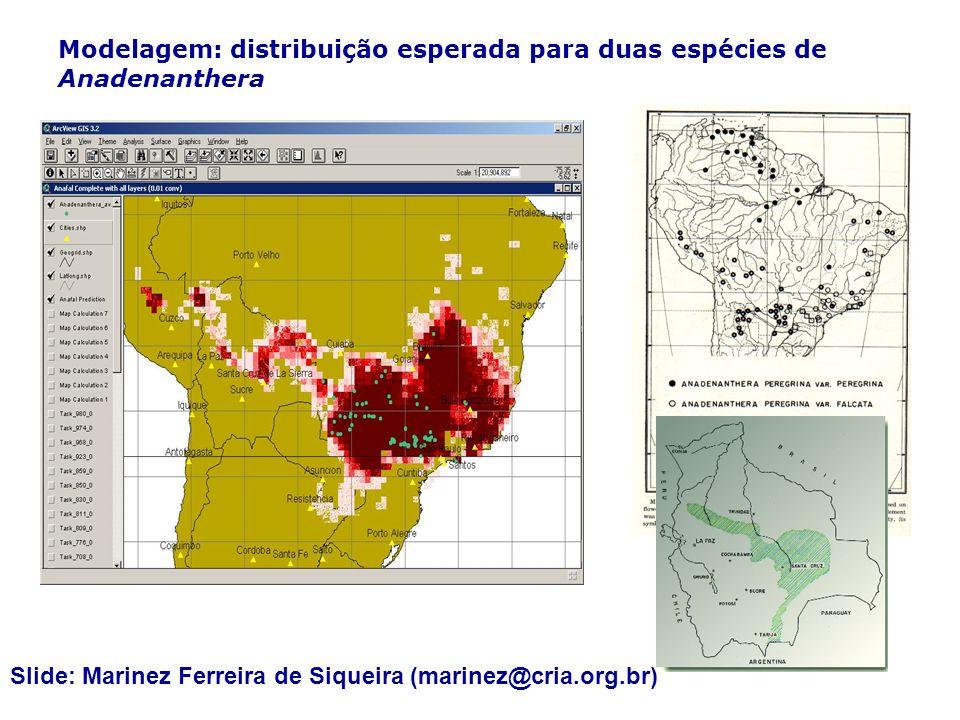 Modelagem: distribuição esperada para duas espécies de Anadenanthera Slide: Marinez Ferreira de Siqueira (marinez@cria.org.br)