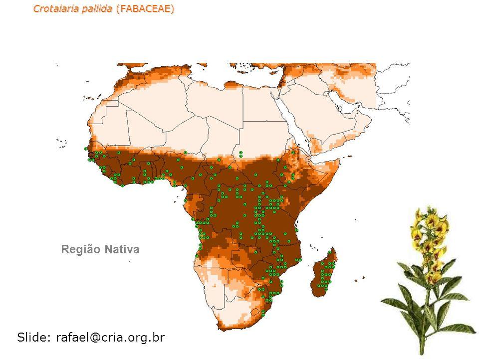 Crotalaria pallida (FABACEAE) Região Nativa Slide: rafael@cria.org.br
