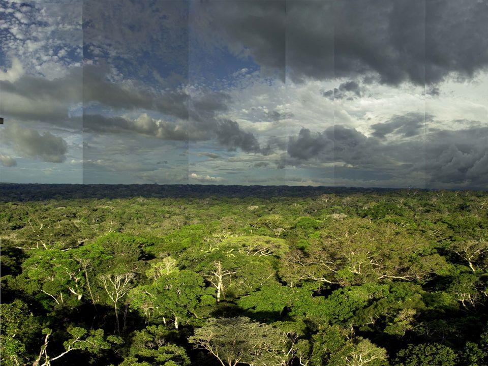 (3) COBERTURA FLORÍSTICA ORIGINAL DAS ÁREAS DE INTERESSE 40 amostras de campo.
