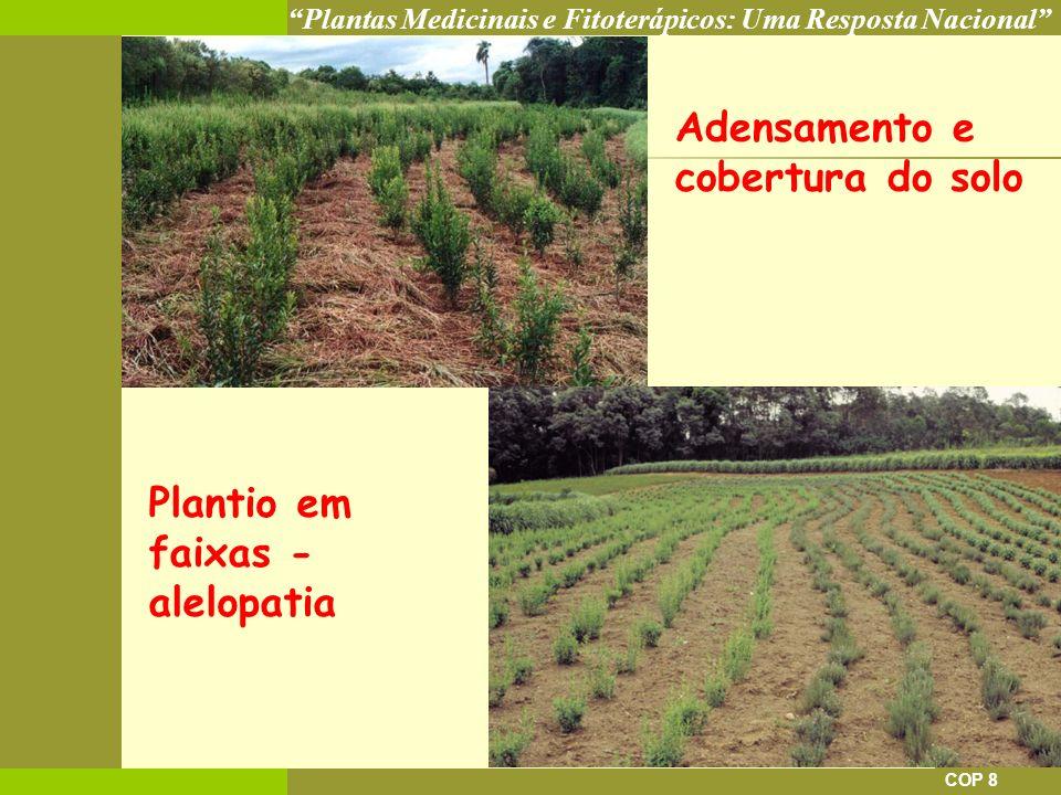 Plantas Medicinais e Fitoterápicos: Uma Resposta Nacional COP 8 Adensamento e cobertura do solo Plantio em faixas - alelopatia