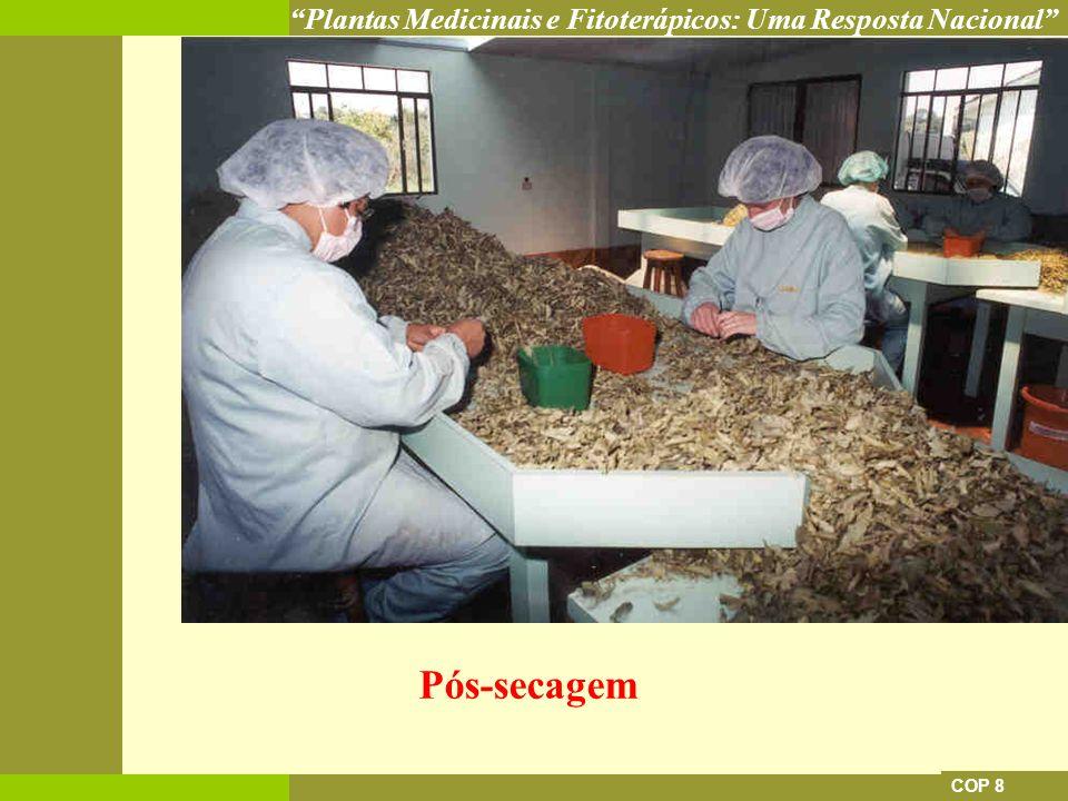 Plantas Medicinais e Fitoterápicos: Uma Resposta Nacional COP 8 Pós-secagem