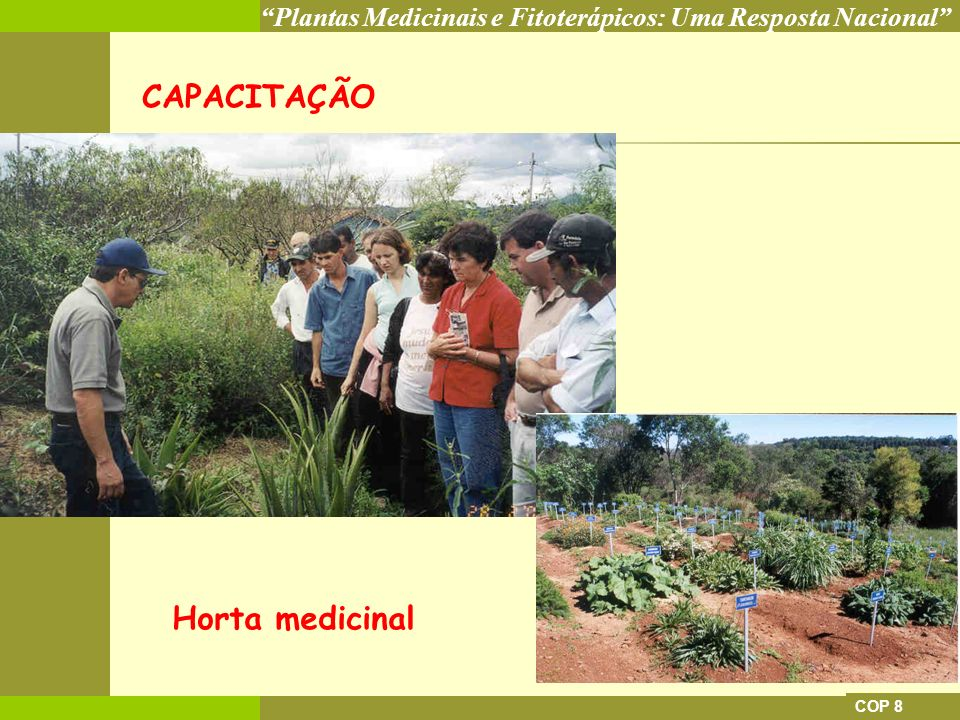 Plantas Medicinais e Fitoterápicos: Uma Resposta Nacional COP 8 CAPACITAÇÃO Horta medicinal