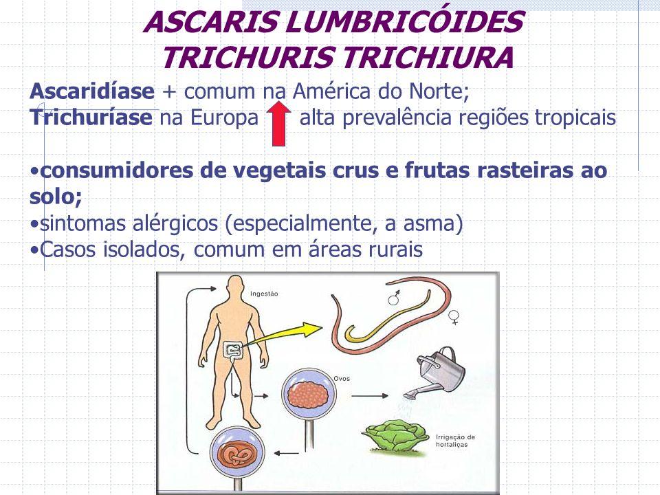 ASCARIS LUMBRICÓIDES TRICHURIS TRICHIURA Ascaridíase + comum na América do Norte; Trichuríase na Europa alta prevalência regiões tropicais consumidore