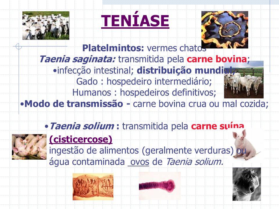TENÍASE Platelmintos: vermes chatos Taenia saginata: transmitida pela carne bovina; infecção intestinal; distribuição mundial; Gado : hospedeiro inter