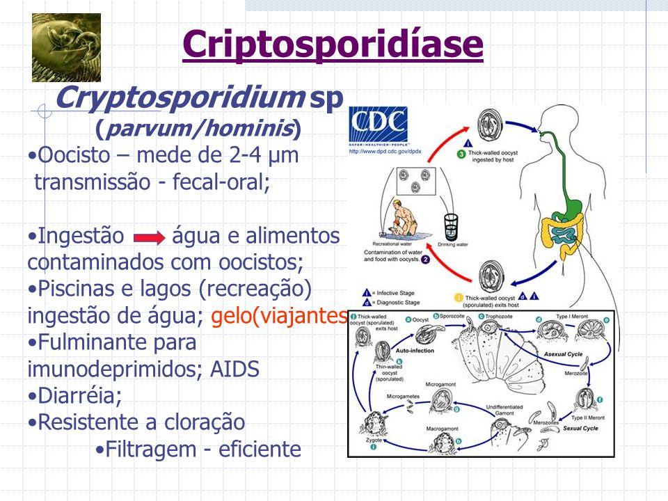 Cryptosporidium sp (parvum/hominis) Oocisto – mede de 2-4 μm transmissão - fecal-oral; Ingestão água e alimentos contaminados com oocistos; Piscinas e