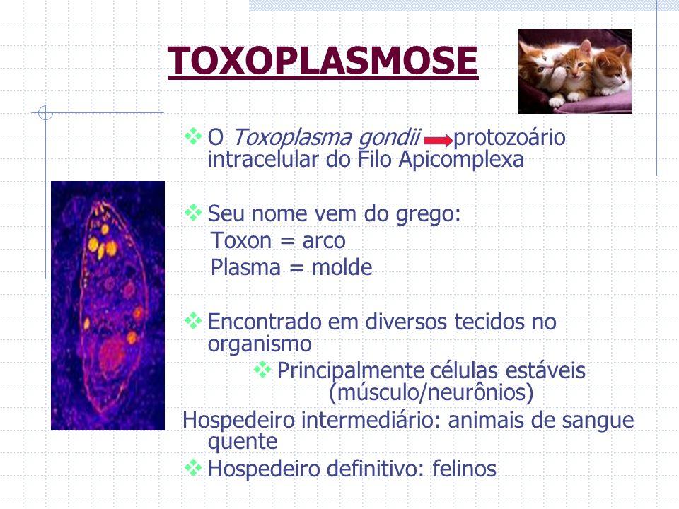 TOXOPLASMOSE O Toxoplasma gondii protozoário intracelular do Filo Apicomplexa Seu nome vem do grego: Toxon = arco Plasma = molde Encontrado em diverso