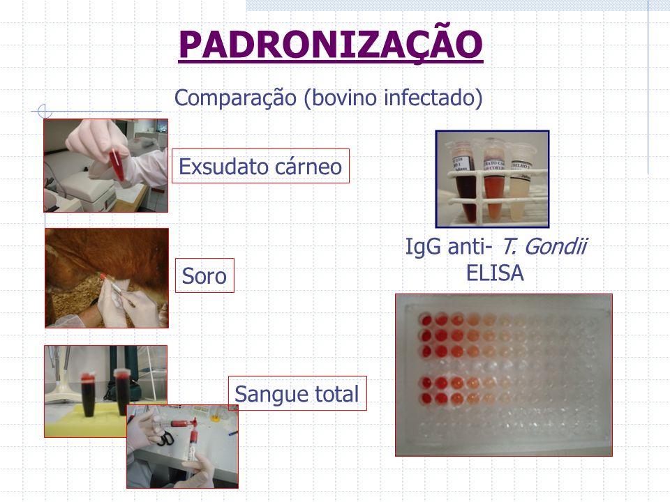 PADRONIZAÇÃO Comparação (bovino infectado) Sangue total Soro Exsudato cárneo IgG anti- T. Gondii ELISA