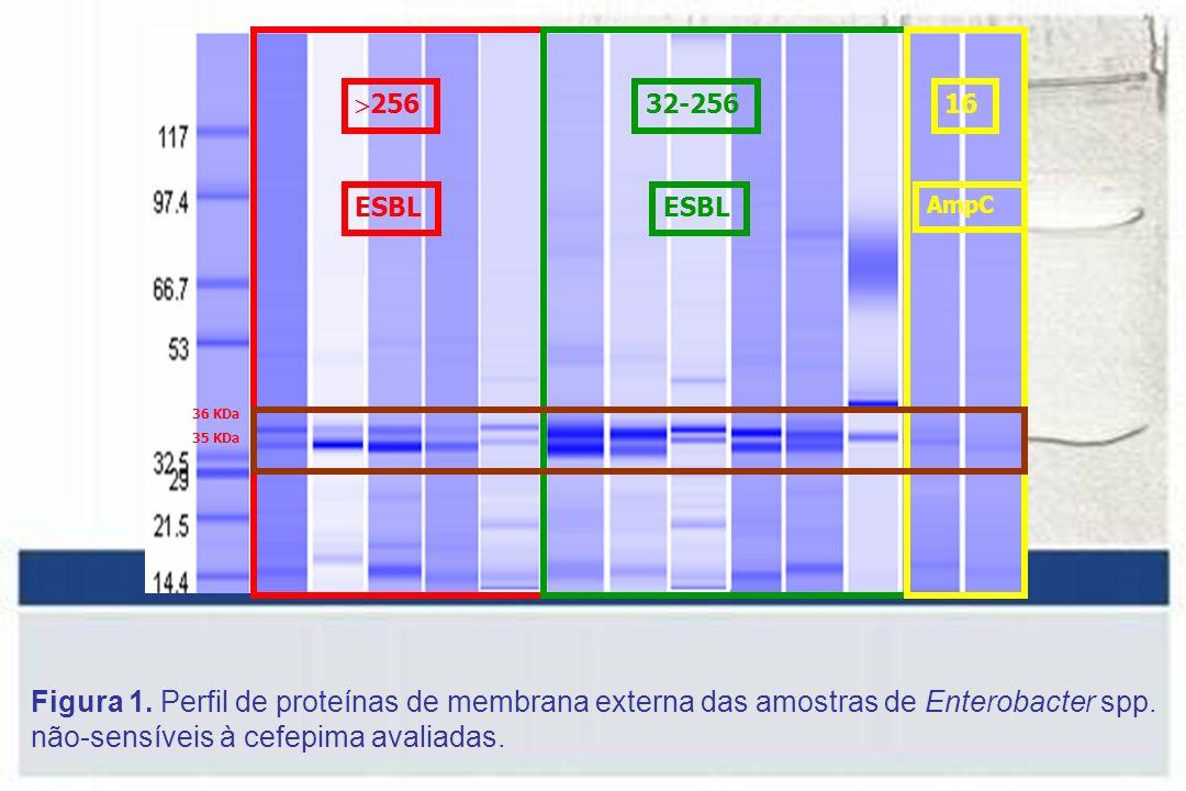 256 ESBL 32-256 ESBL 16 AmpC 36 KDa 35 KDa Figura 1.