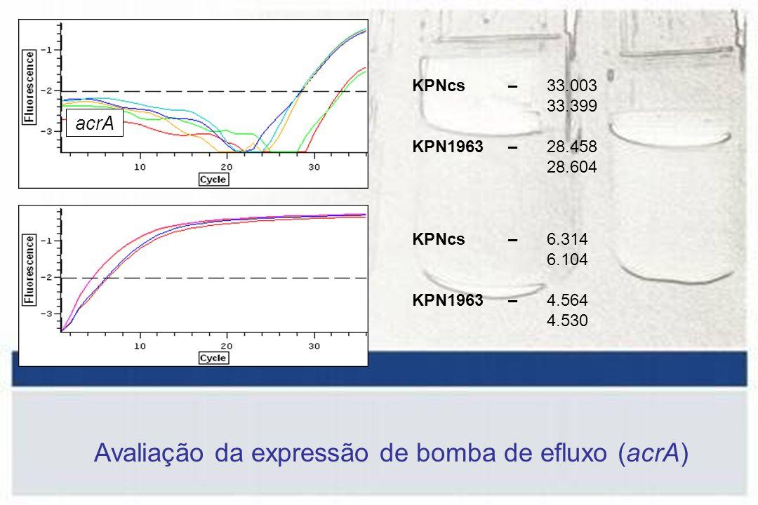 acrA KPNcs – 33.003 33.399 KPN1963 – 28.458 28.604 KPNcs – 6.314 6.104 KPN1963 – 4.564 4.530 Avaliação da expressão de bomba de efluxo (acrA)