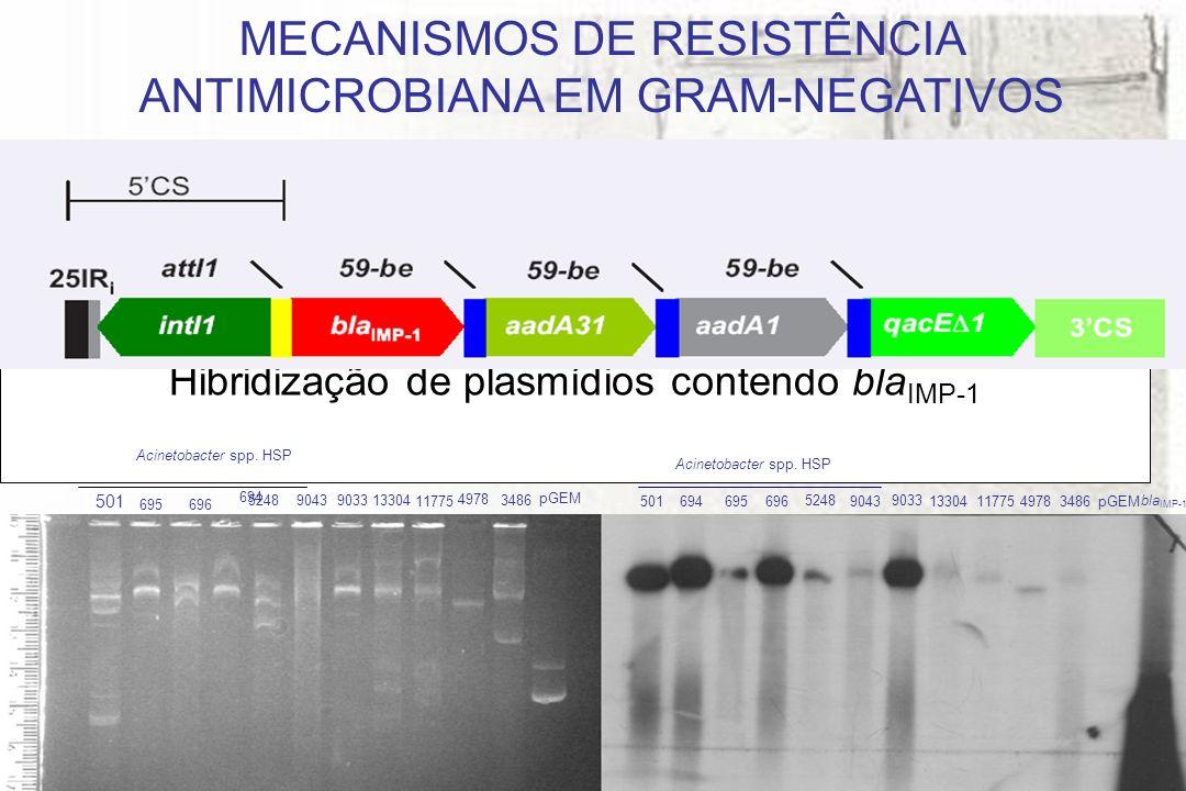 Hibridização de plasmídios contendo bla IMP-1 MECANISMOS DE RESISTÊNCIA ANTIMICROBIANA EM GRAM-NEGATIVOS 501 694 695 696 5248 9043 9033 13304 9033 11775 13304 11775 4978 pGEM bla IMP-1 pGEM 4978 3486 Acinetobacter spp.