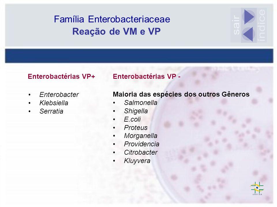 Citrato de Simmons Escherichia coli Glicose+/Gás+/- sacarose+/- urease- *H 2S- TDA- indol+ LDC+/- Motilidade+/- lac+ CISI - K.oxytoca ( LDC+/ motil.-CiSi+) Diagnóstico Diferencial Citrobacter amalonaticus e C.