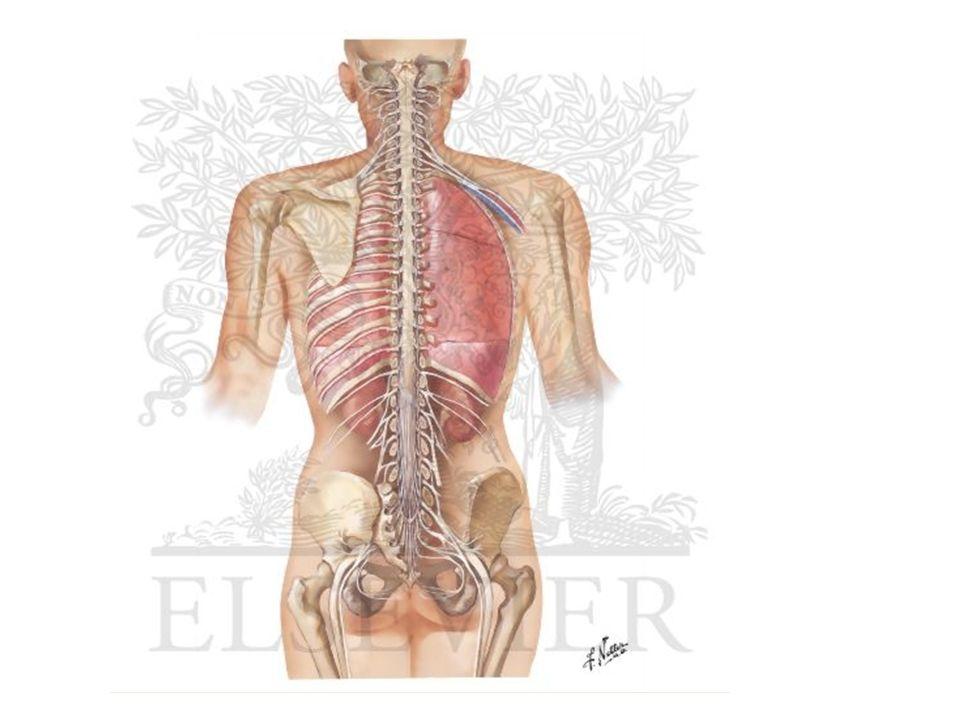 A cintilografia é um método de diagnóstico sensível mas inespecífico para detectar a atividade da artrose, seu aparecimento aparentemente precede ao aparecimento nos estudos radiologicos.