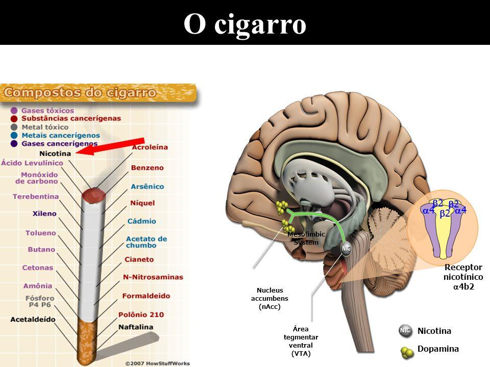 Tabagismo Reforço positivo: - Ação da nicotina na Área de Recompensa Cerebral liberando dopamina e resultando em sensações prazerosas - Ação nos receptores colinérgicos do tipo nicotínico proporcionando redução do apetite, aumento da disposição, do estado de alerta e da atenção Condicionamento: - Desencadeado por estímulos ambientais e emoções positivas e negativas associadas ao ato de fumar Reforço negativo: - Manutenção do uso para evitar o desconforto proporcionado pelos sintomas da síndrome de abstinência, principalmente ansiedade, disforia, aumento do apetite, irritabilidade e dificuldade de concentração
