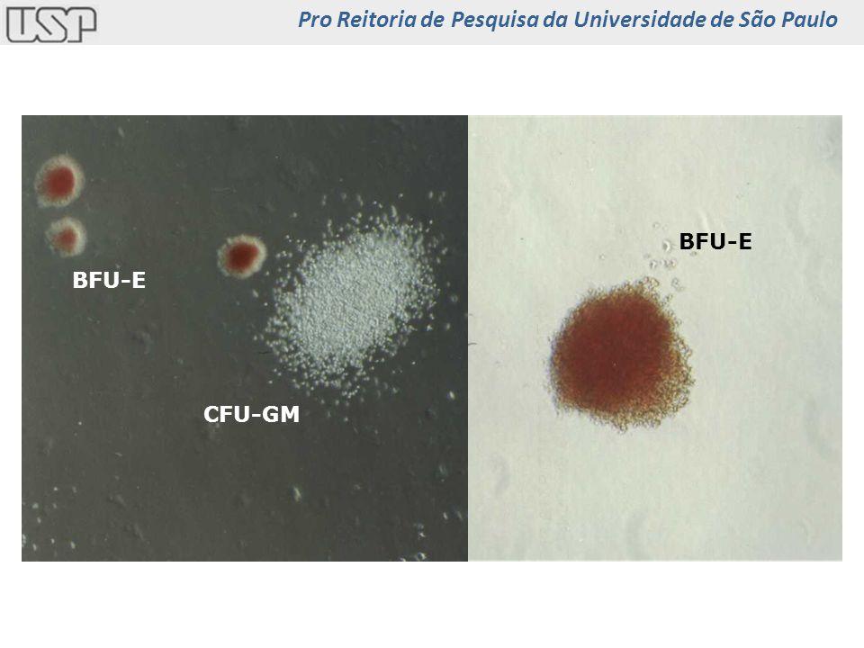 CFU-GM BFU-E Pro Reitoria de Pesquisa da Universidade de São Paulo