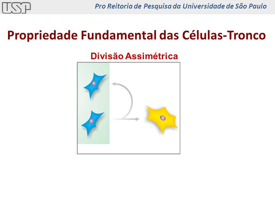 Propriedade Fundamental das Células-Tronco Divisão Assimétrica Pro Reitoria de Pesquisa da Universidade de São Paulo