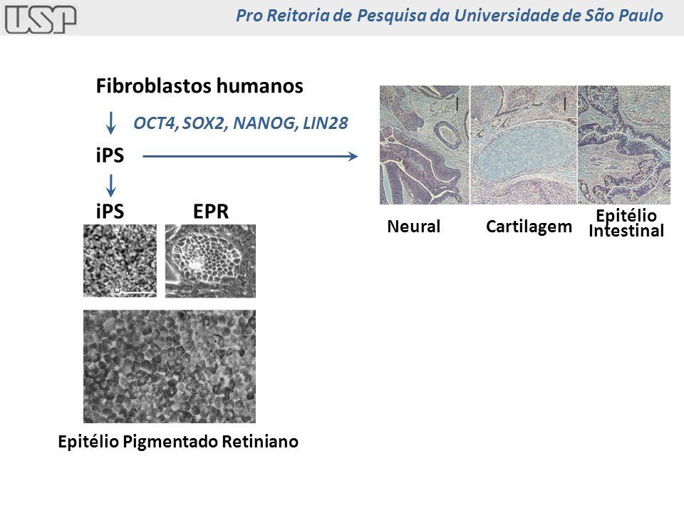 Fibroblastos humanos iPS OCT4, SOX2, NANOG, LIN28 EPR Epitélio Pigmentado Retiniano NeuralCartilagem Epitélio Intestinal Royal College of Surgeons dystrophic rats Pro Reitoria de Pesquisa da Universidade de São Paulo