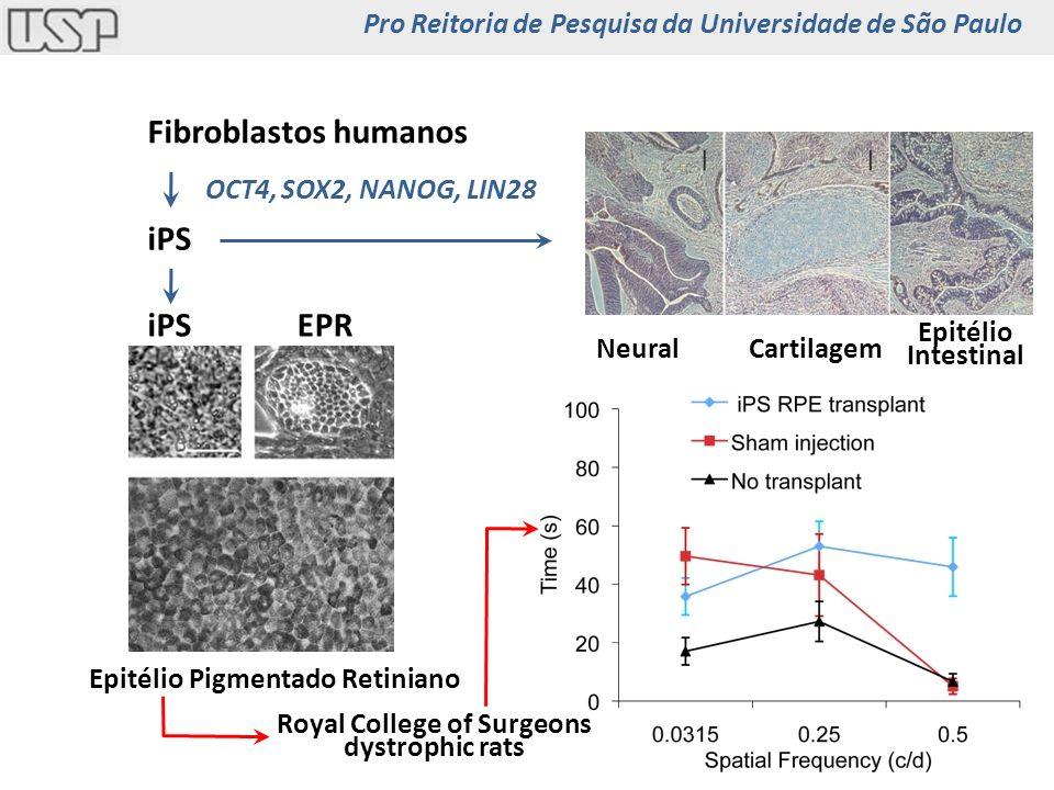 Limbo contém as células tronco que repõem as células da superfície da córnea Córnea Conjuntiva Limbo Córnea e células tronco Pro Reitoria de Pesquisa da Universidade de São Paulo