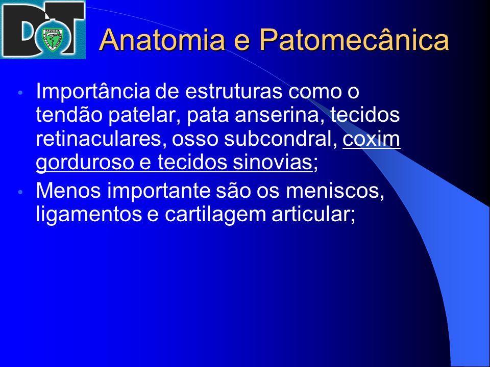 Anatomia e Patomecânica Importância de estruturas como o tendão patelar, pata anserina, tecidos retinaculares, osso subcondral, coxim gorduroso e teci