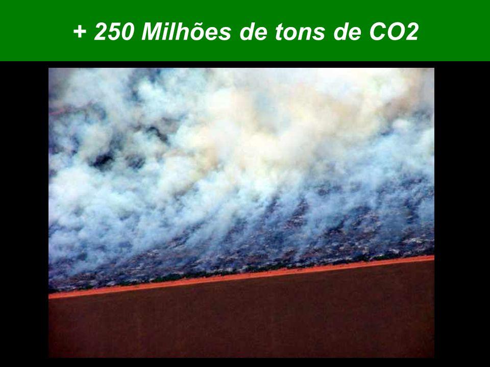 + 250 Milhões de tons de CO2