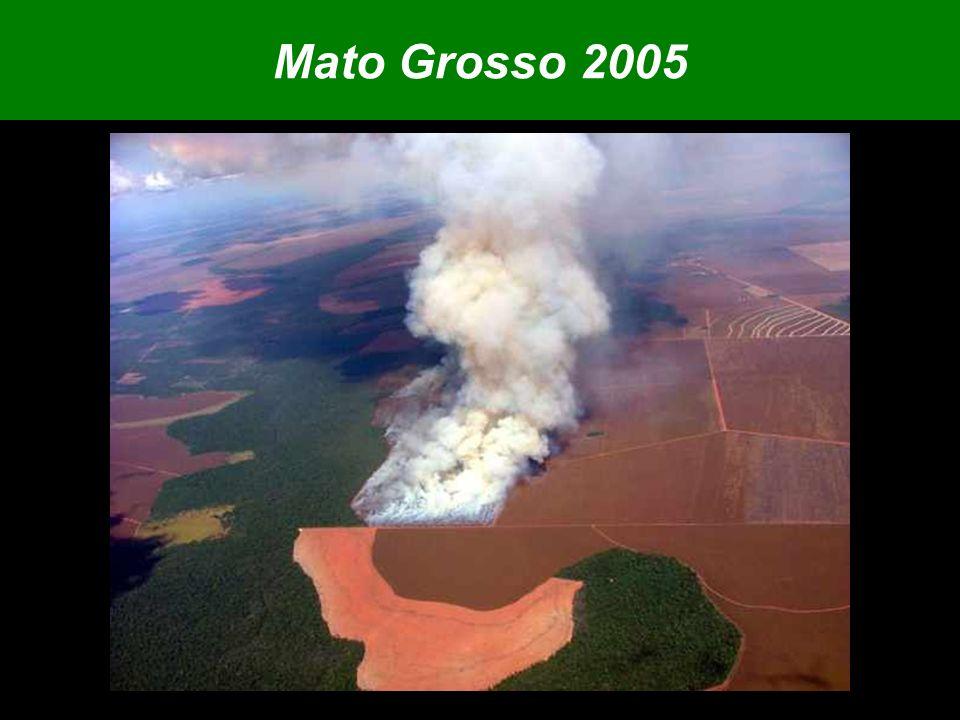 Mato Grosso 2005