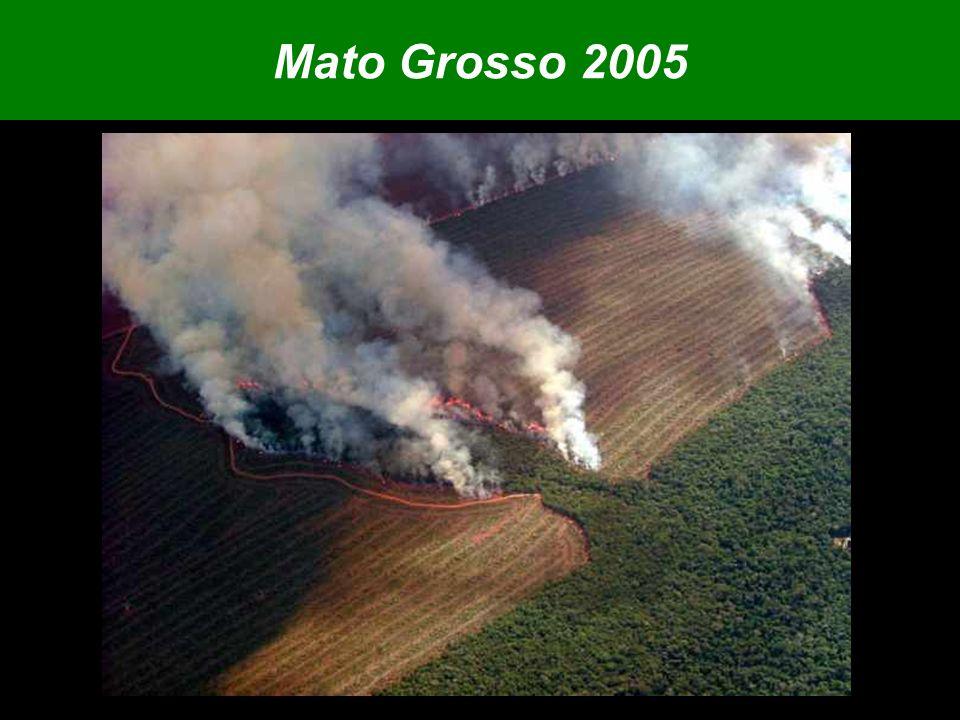 Estados que dominam 90% do mercado são os grandes desmatadores Fonte: MDIC Exportações de madeira amazônica 2004 (em US$)