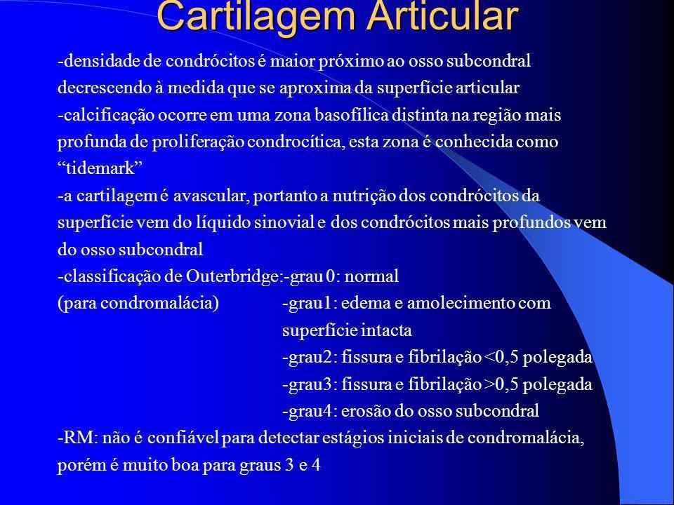 Cartilagem Articular -densidade de condrócitos é maior próximo ao osso subcondral decrescendo à medida que se aproxima da superfície articular -calcif