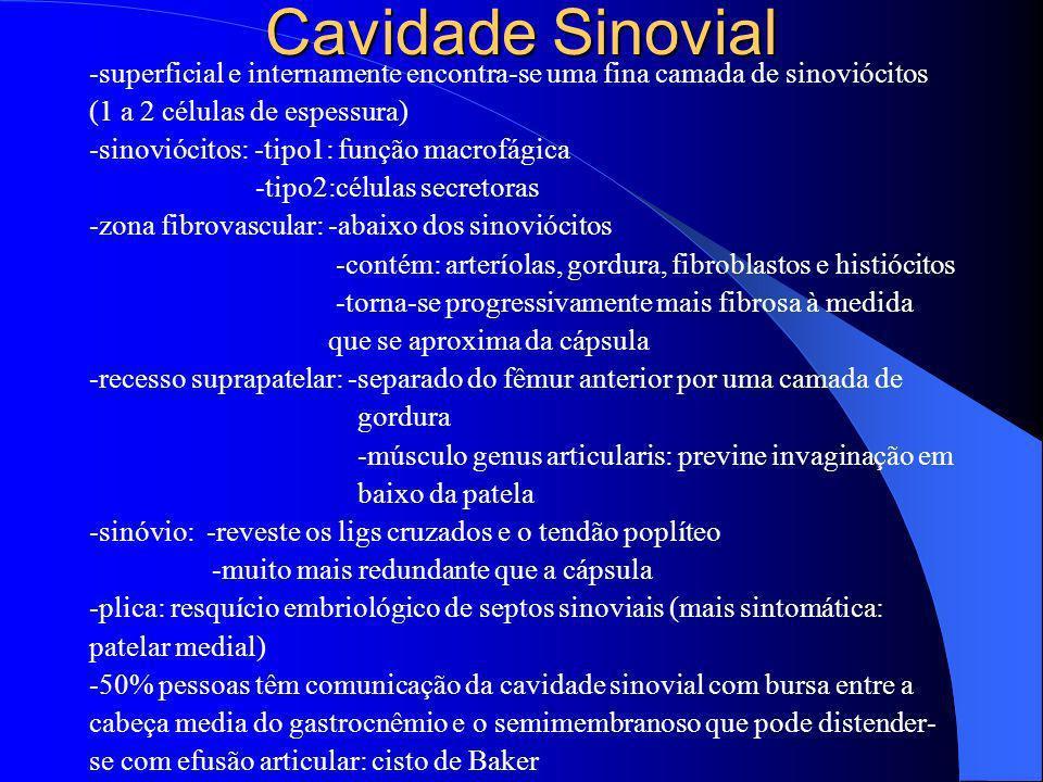 Cavidade Sinovial -superficial e internamente encontra-se uma fina camada de sinoviócitos (1 a 2 células de espessura) -sinoviócitos: -tipo1: função m