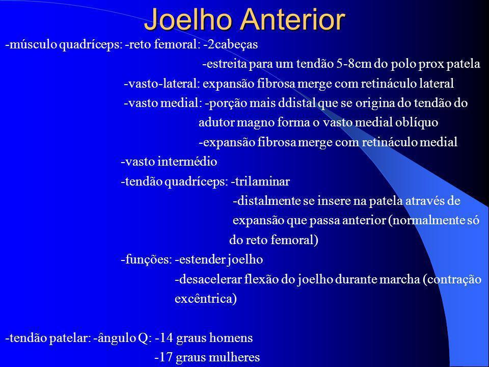 Joelho Anterior -músculo quadríceps: -reto femoral: -2cabeças -estreita para um tendão 5-8cm do polo prox patela -vasto-lateral: expansão fibrosa merg