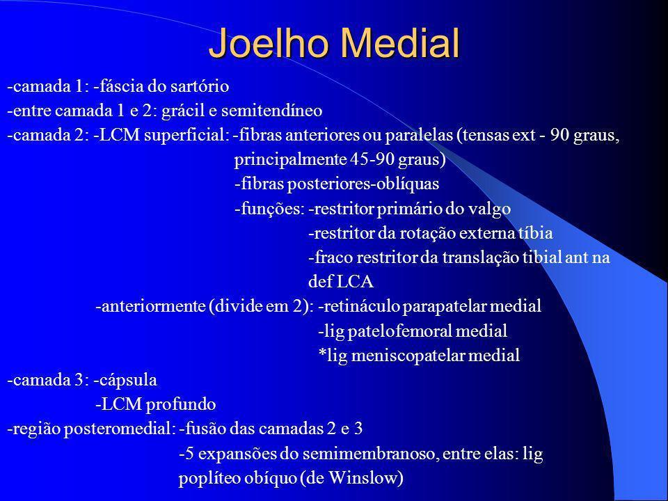 Joelho Medial -camada 1: -fáscia do sartório -entre camada 1 e 2: grácil e semitendíneo -camada 2: -LCM superficial: -fibras anteriores ou paralelas (