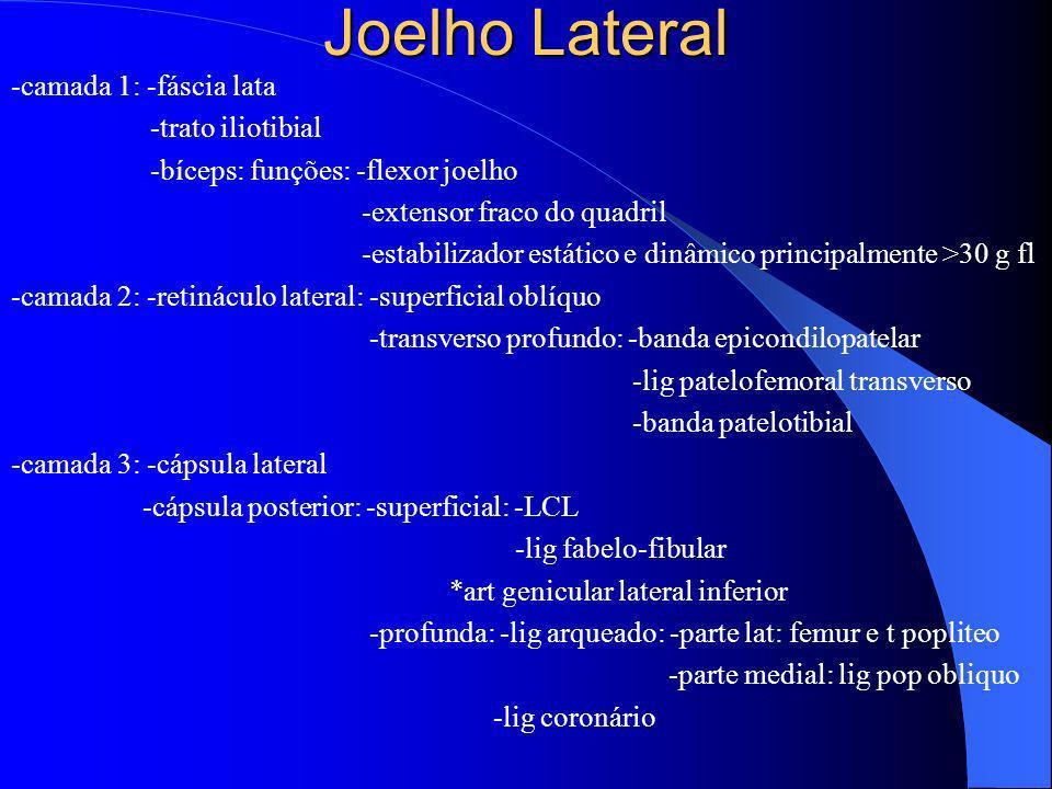 Joelho Lateral -camada 1: -fáscia lata -trato iliotibial -bíceps: funções: -flexor joelho -extensor fraco do quadril -estabilizador estático e dinâmic