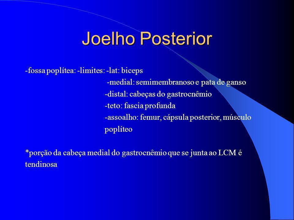Joelho Posterior -fossa poplítea: -limites: -lat: biceps -medial: semimembranoso e pata de ganso -distal: cabeças do gastrocnêmio -teto: fascia profun
