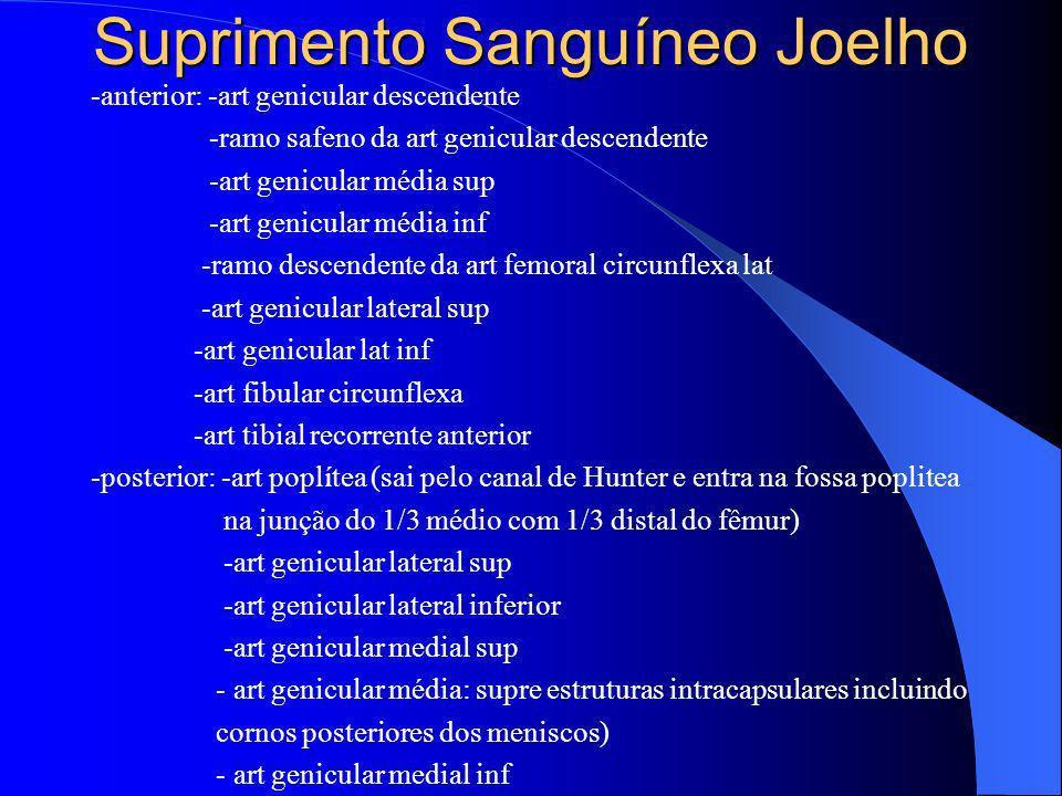 Suprimento Sanguíneo Joelho -anterior: -art genicular descendente -ramo safeno da art genicular descendente -art genicular média sup -art genicular mé