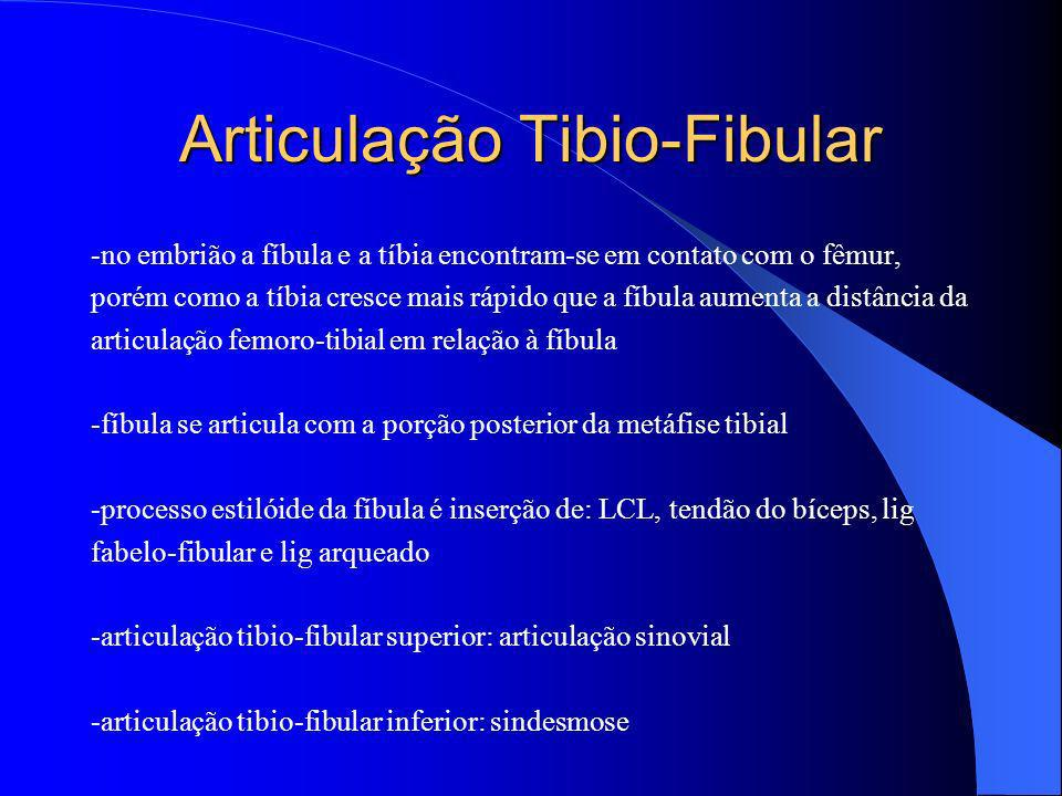 Articulação Tibio-Fibular -no embrião a fíbula e a tíbia encontram-se em contato com o fêmur, porém como a tíbia cresce mais rápido que a fíbula aumen