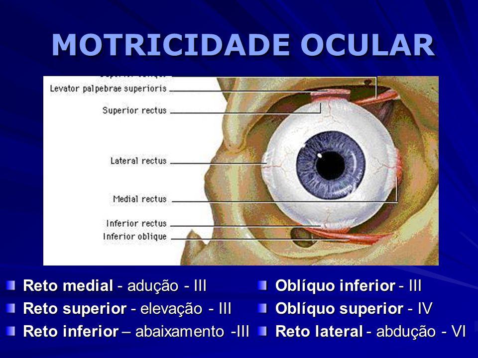 MOTRICIDADE OCULAR Reto medial - adução - III Reto superior - elevação - III Reto inferior – abaixamento -III Oblíquo inferior - III Oblíquo superior