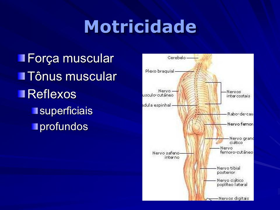 MotricidadeMotricidade Força muscular Tônus muscular Reflexossuperficiaisprofundos
