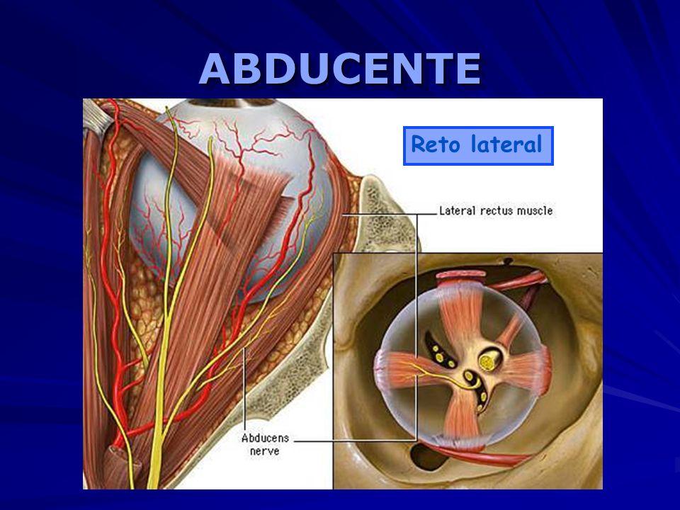 ABDUCENTEABDUCENTE Reto lateral