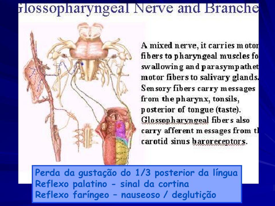 Perda da gustação do 1/3 posterior da língua Reflexo palatino - sinal da cortina Reflexo faríngeo – nauseoso / deglutição