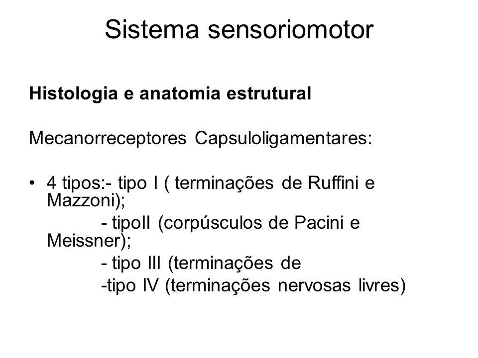 Sistema sensoriomotor Histologia e anatomia estrutural Mecanorreceptores Capsuloligamentares: 4 tipos:- tipo I ( terminações de Ruffini e Mazzoni); -