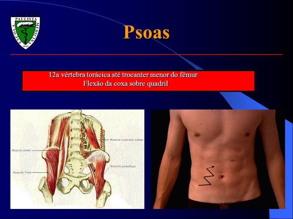 Psoas 12a vértebra torácica até trocanter menor do fêmur Flexão da coxa sobre quadril