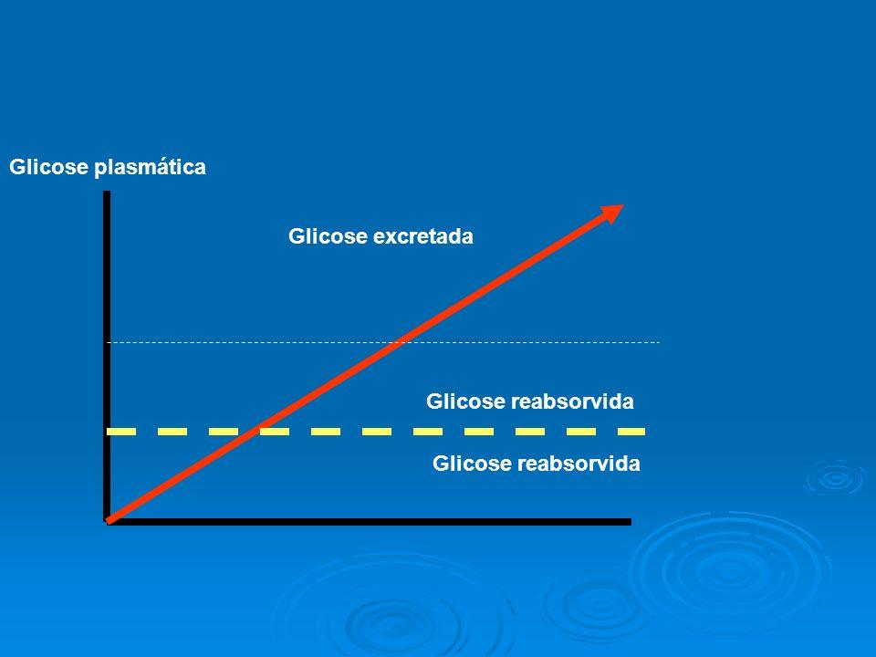 Glicose reabsorvida Glicose excretada Glicose plasmática