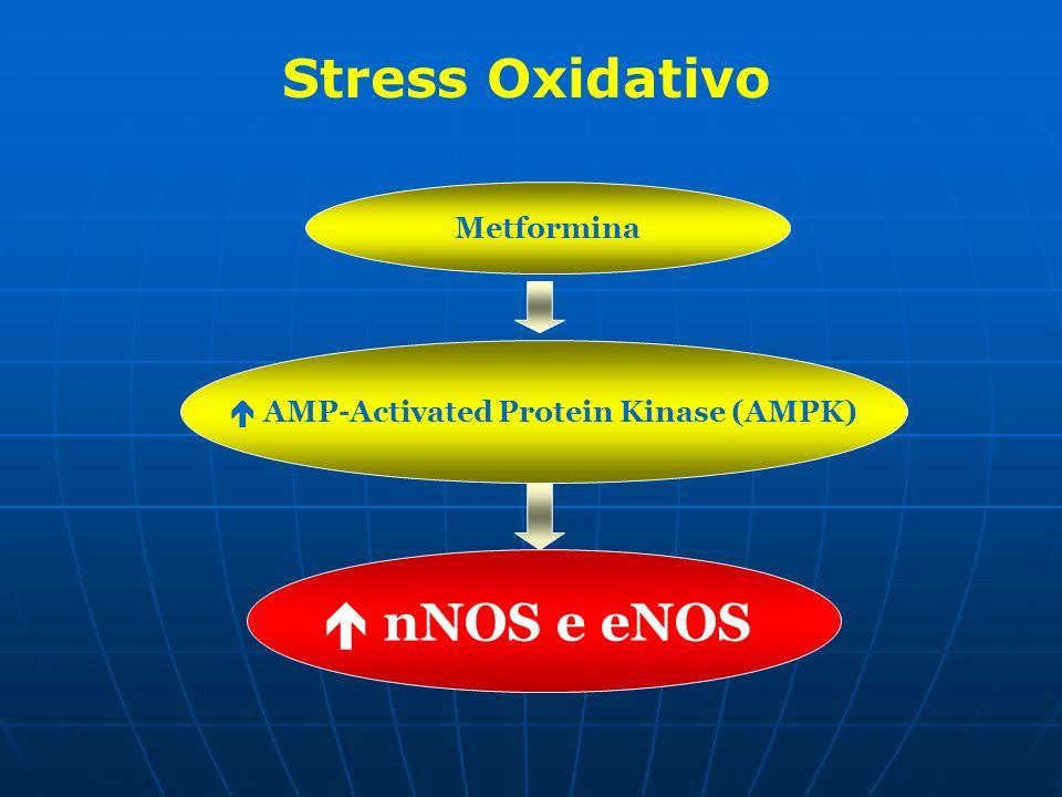 Metformina AMP-Activated Protein Kinase (AMPK) nNOS e eNOS Stress Oxidativo
