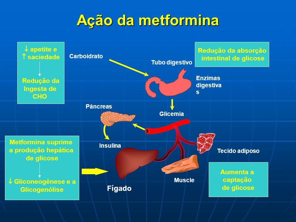 Insulina Tubo digestivo Ação da metformina Carboidrato Tecido adiposo Glicemia Enzimas digestiva s Pâncreas Muscle Fígado Metformina suprime a produçã