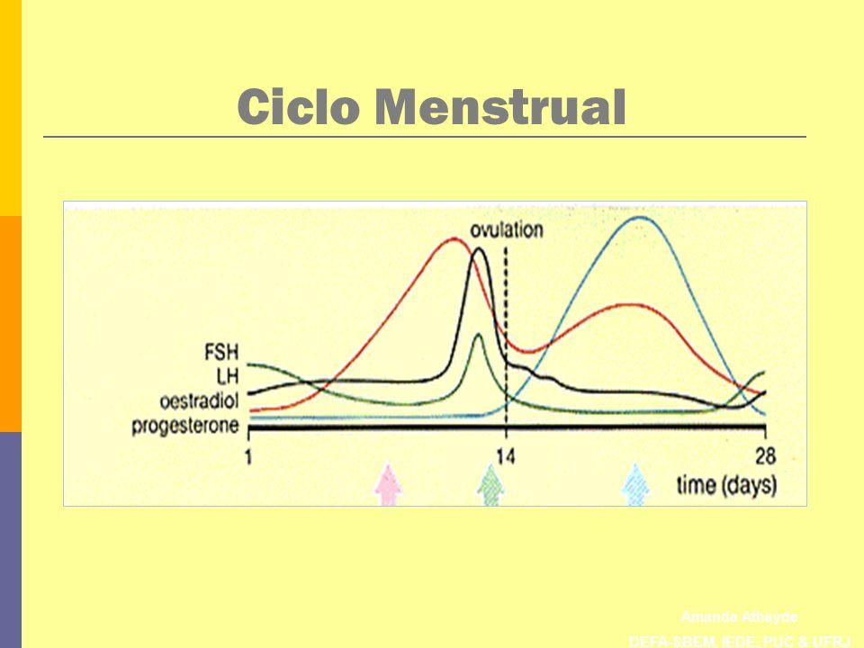 Amanda Athayde DEFA-SBEM, IEDE, PUC & UFRJ Ciclo Menstrual