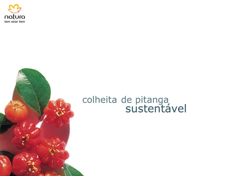 sustentável colheita de pitanga