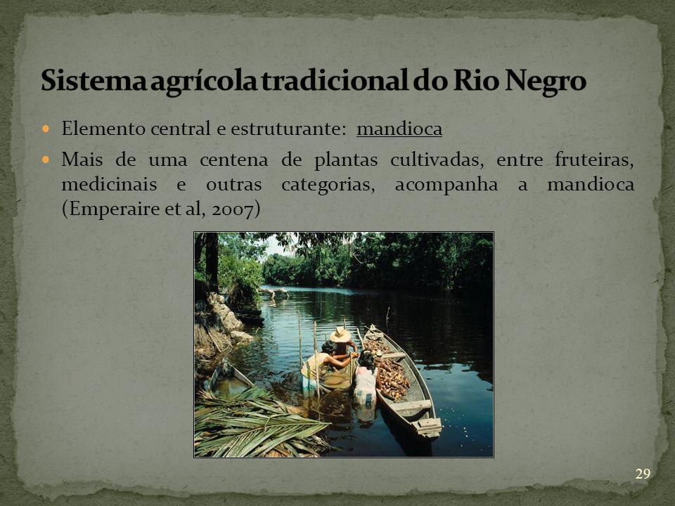Elemento central e estruturante: mandioca Mais de uma centena de plantas cultivadas, entre fruteiras, medicinais e outras categorias, acompanha a mand