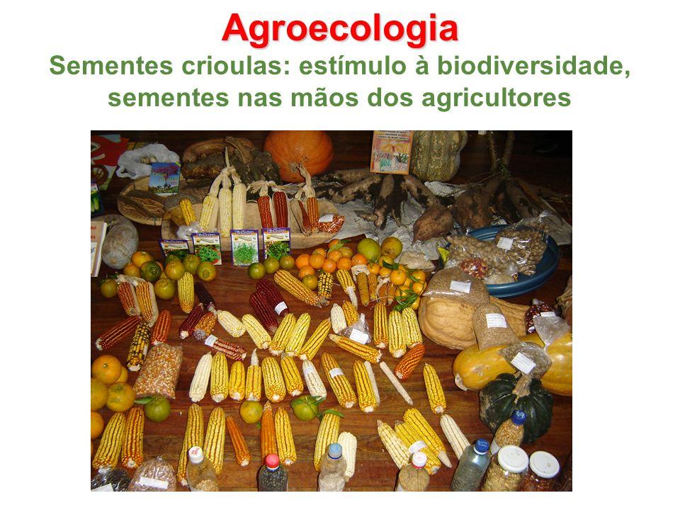 Agroecologia Sementes crioulas: estímulo à biodiversidade, sementes nas mãos dos agricultores