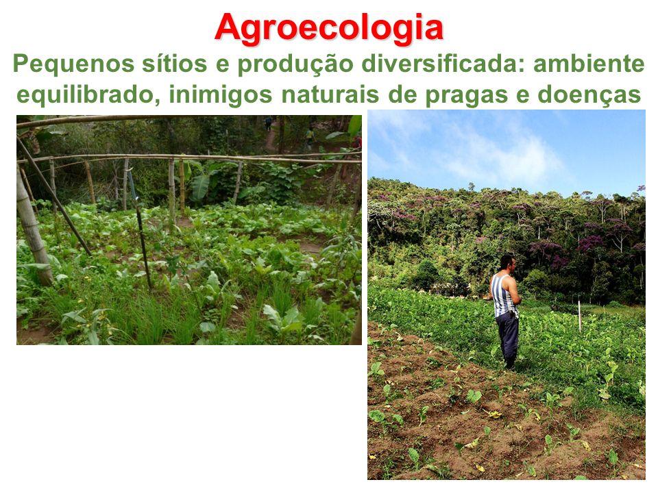 Agroecologia Pequenos sítios e produção diversificada: ambiente equilibrado, inimigos naturais de pragas e doenças