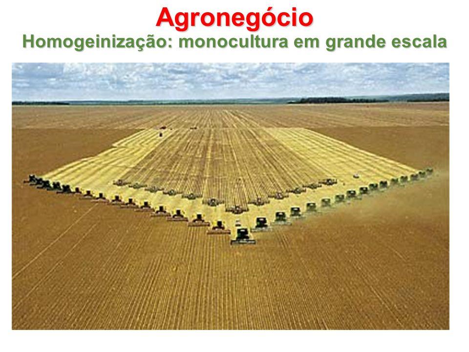 Agronegócio Homogeinização: monocultura em grande escala